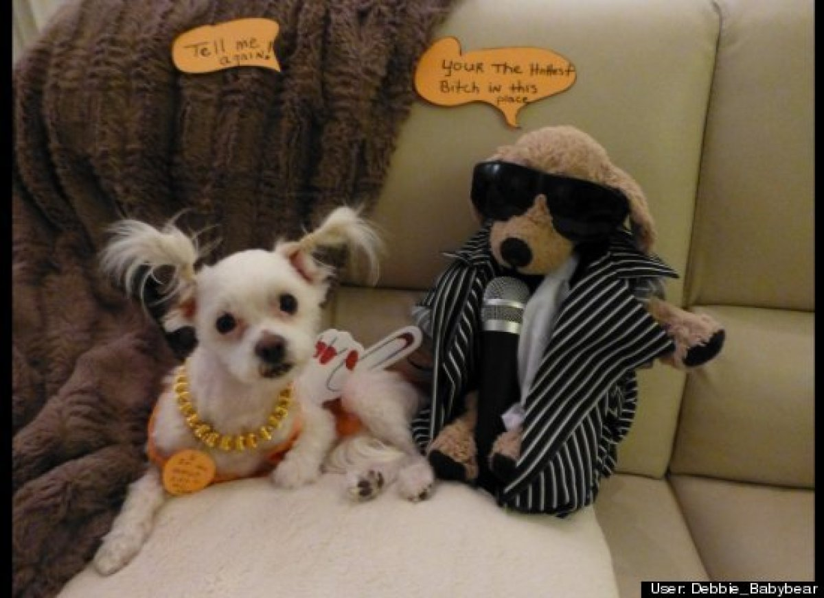 25 Pet Halloween Costumes That Are So Cute We Can't Even | HuffPost