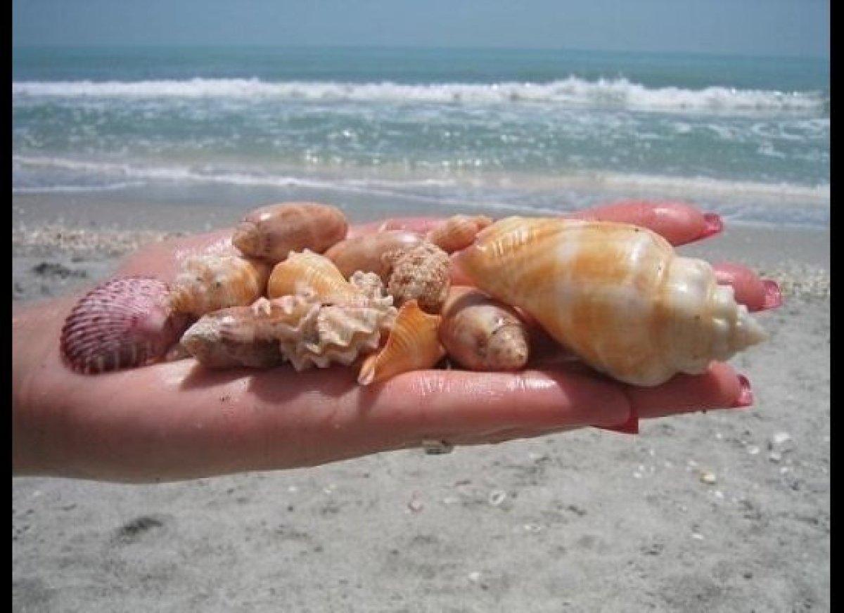 Best Time To Visit Sanibel Island For Shells