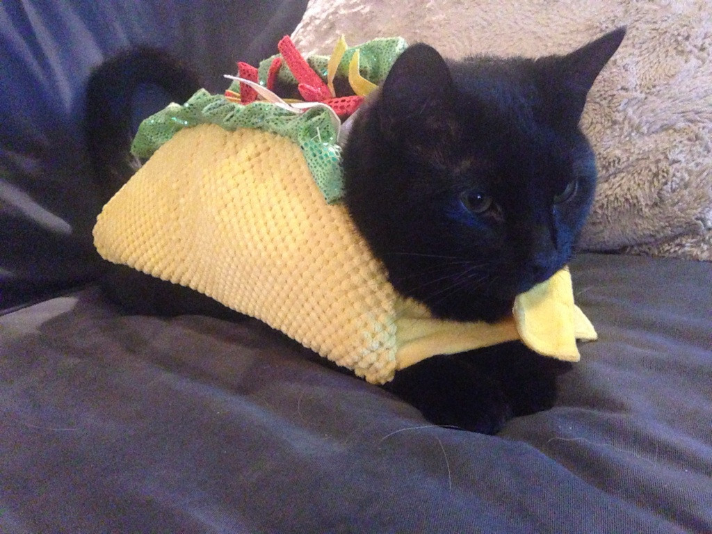 Showthread as well Taco Halloween Costumes n 4143364 likewise Lionel Switch Track Wiring Diagram further Possible To Use Usb 2 0 Front Panel Ports On Usb 3 0 Motherboard Header moreover Dcc Wiring Diagram. on tortoise wiring