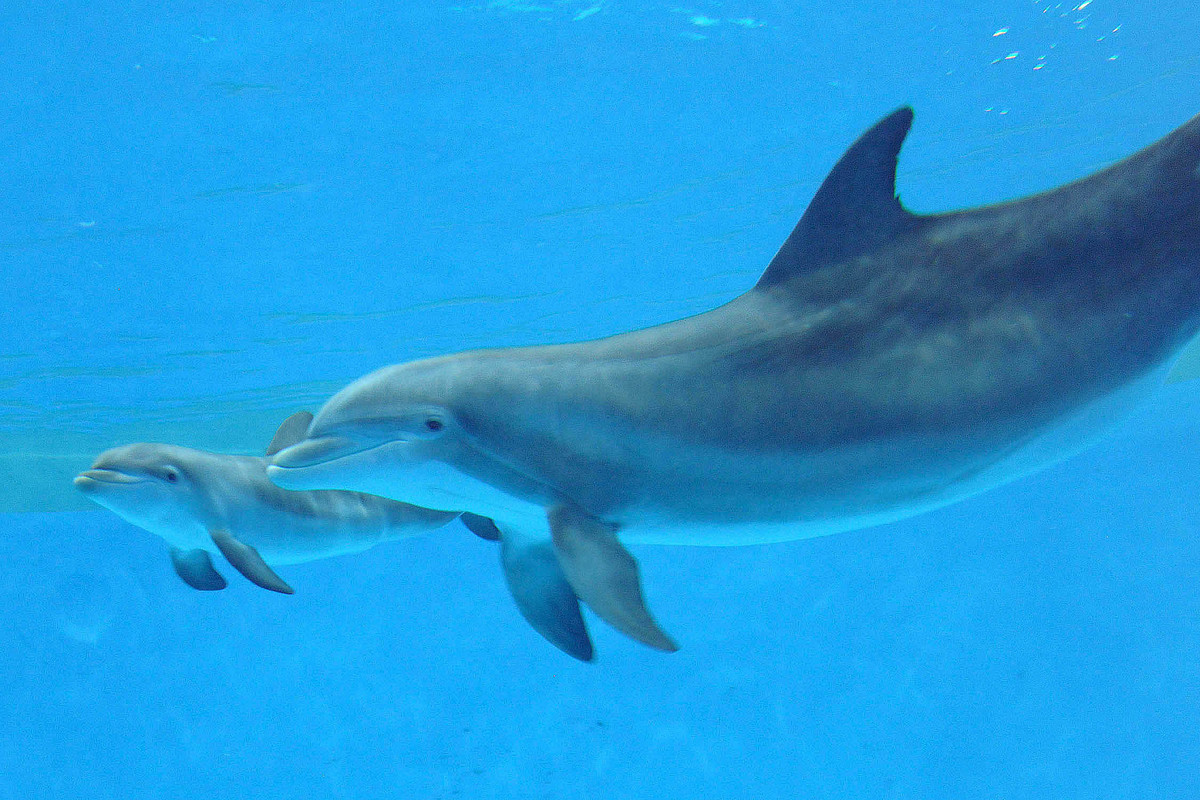 images of baby dolphins - photo #13