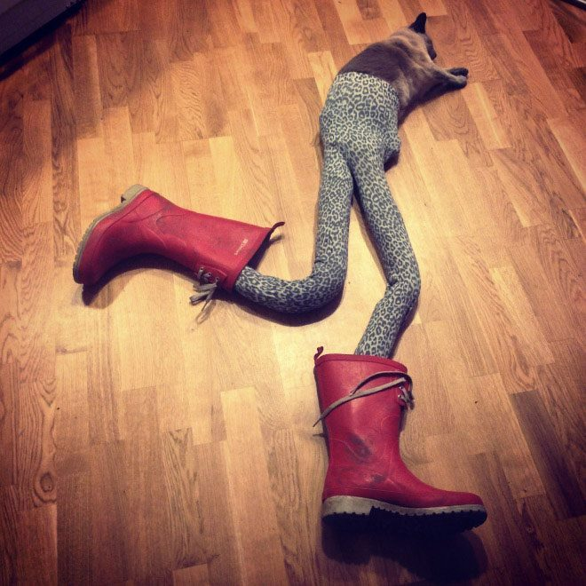 cats wearing tights that is all pictures huffpost uk