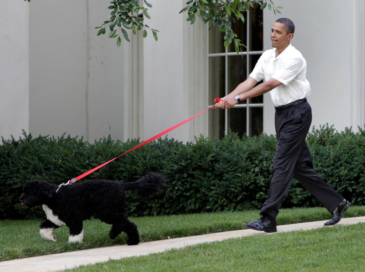 Miss Beazley Dead: George W. Bush's Dog Dies After Battle ...