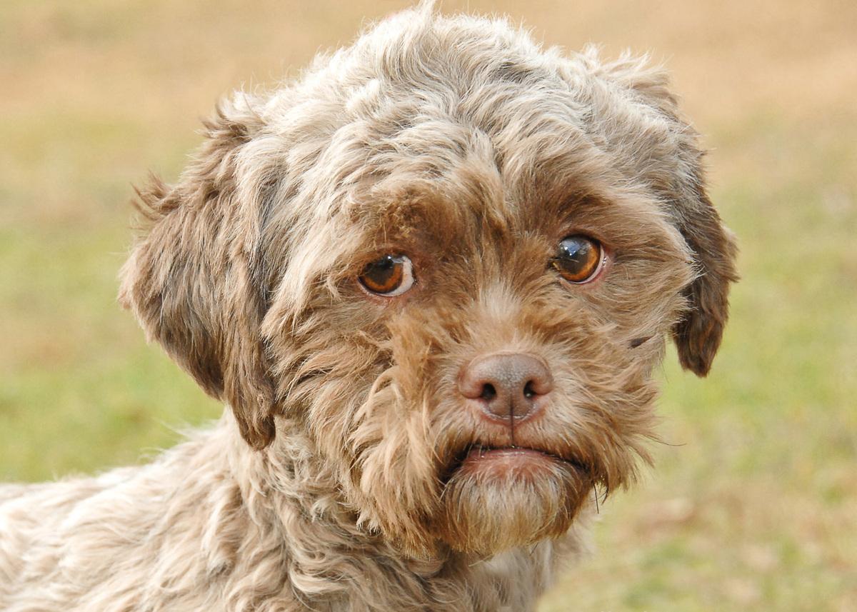 Dog And Human Mix Dog with human face