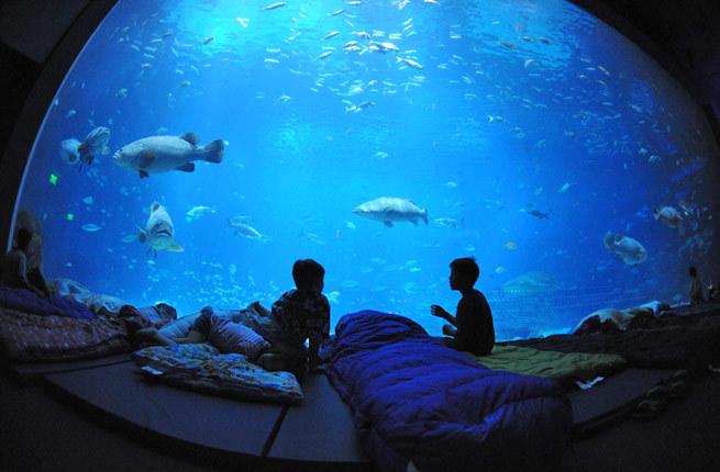 World 39 S Coolest Underwater Lodgings Huffpost