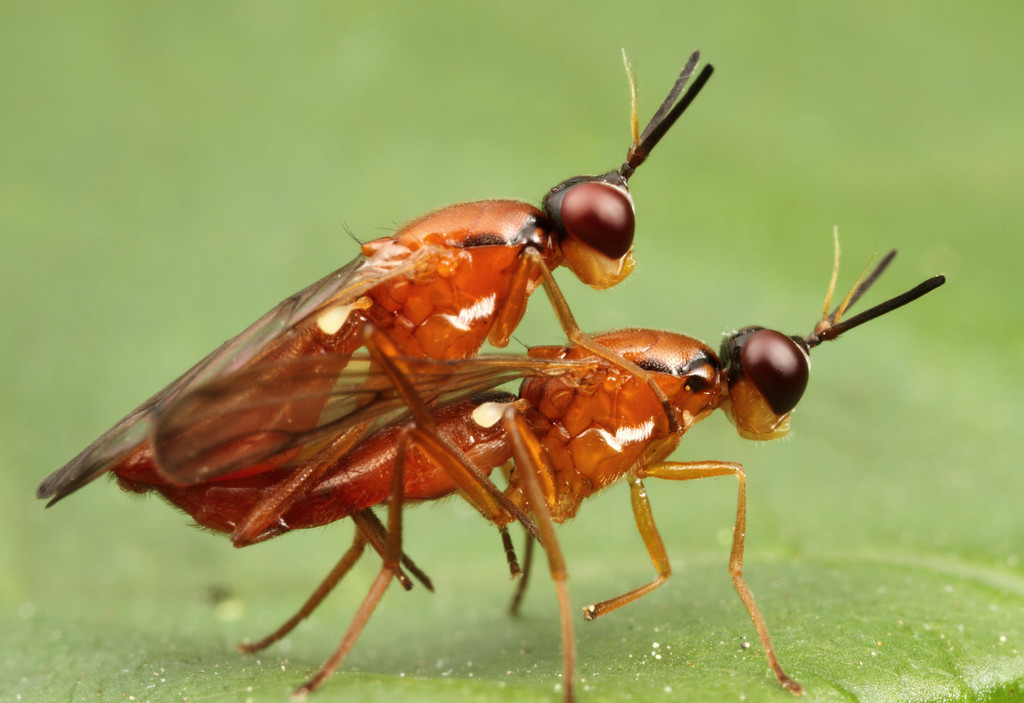insect sex stories