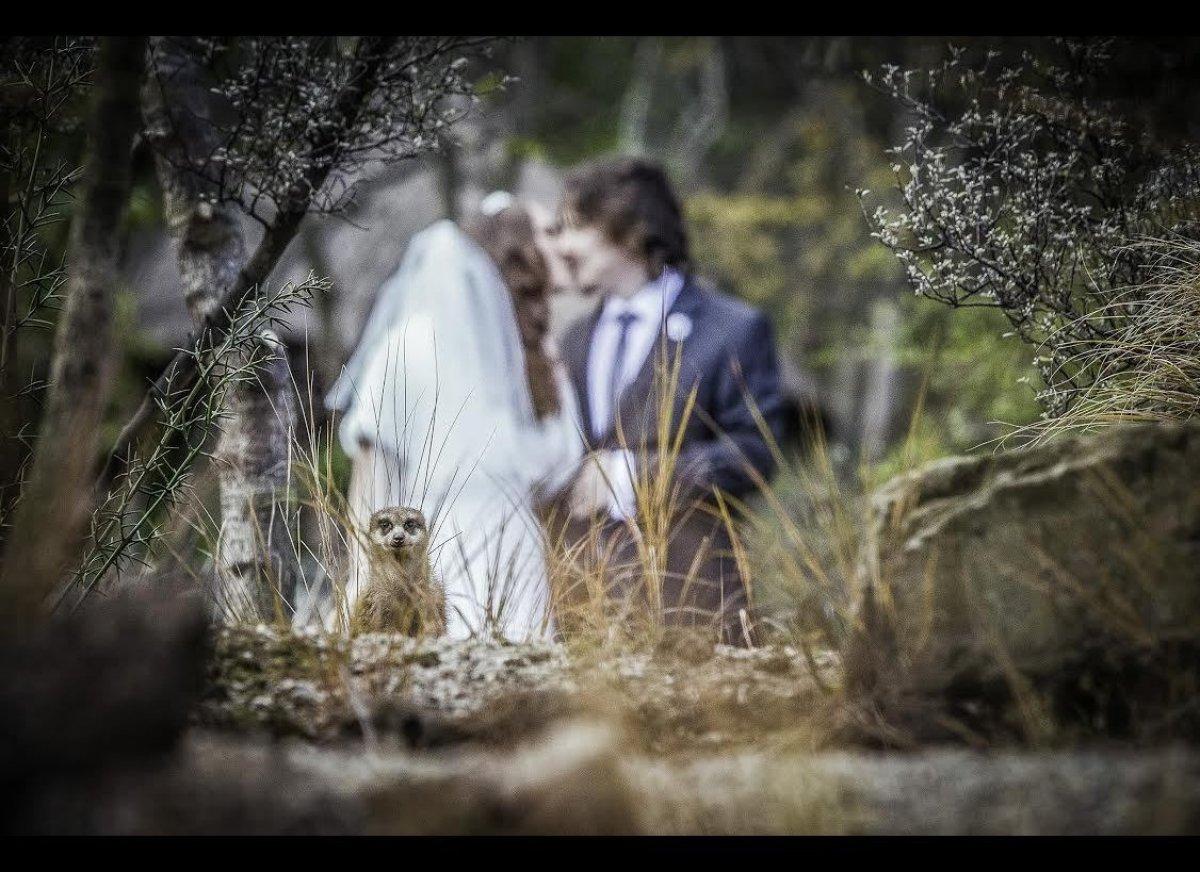 фасад здания у фотографов удалились фото со свадьбы вашим услугам открытый