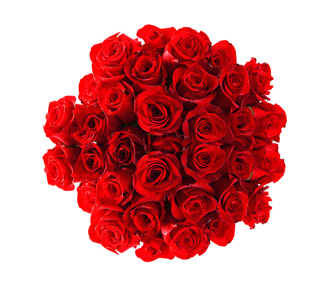 north rose big and beautiful singles Just have a look romantic red roses pictures  home pictures mag flowers romantic red roses pictures (33 photos)  so beautiful rose & nice comments of u.