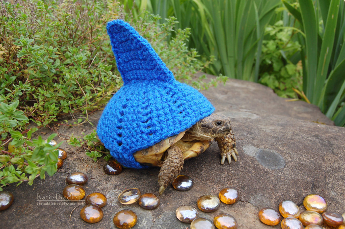 Knitting Pattern For Tortoise Jumper : Snail And Tortoise Sweaters Really Do Exist, And Theyre Surprisingly Ado...