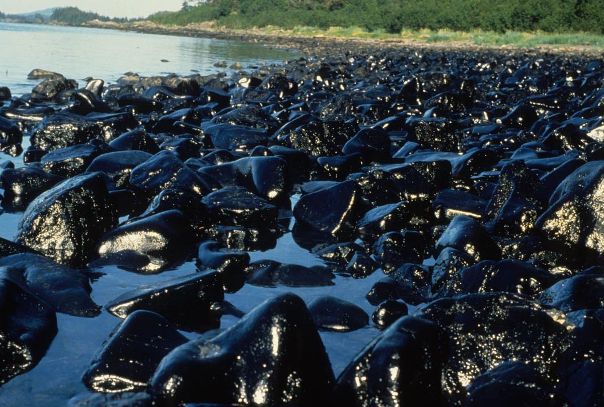 An analysis of the results of the exxon valdez oil spill in alaska