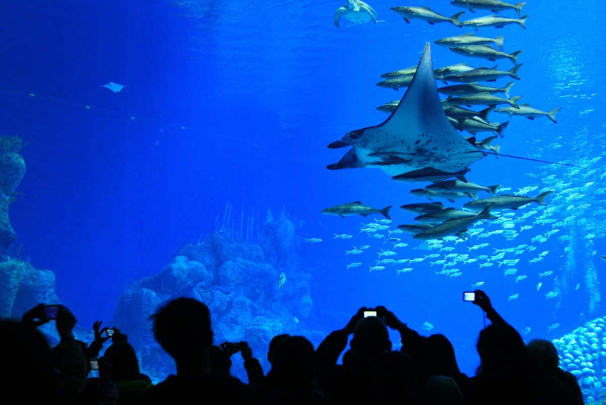 Chimelong Ocean Kingdom World S Largest Aquarium Opens