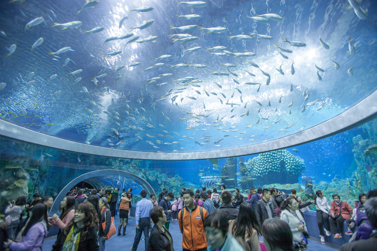 Chimelong Ocean Kingdom World 39 S Largest Aquarium Opens