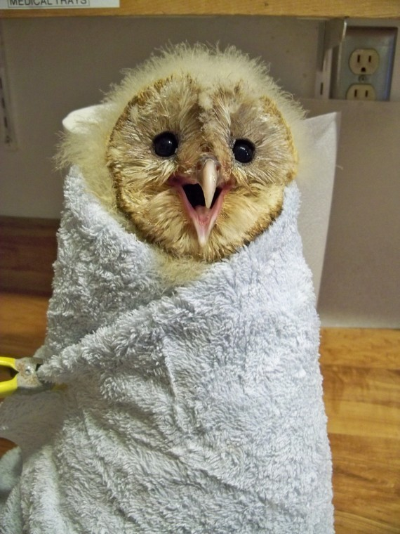 Adorable Animals Wrapped Up Like Burritos Just Broke The