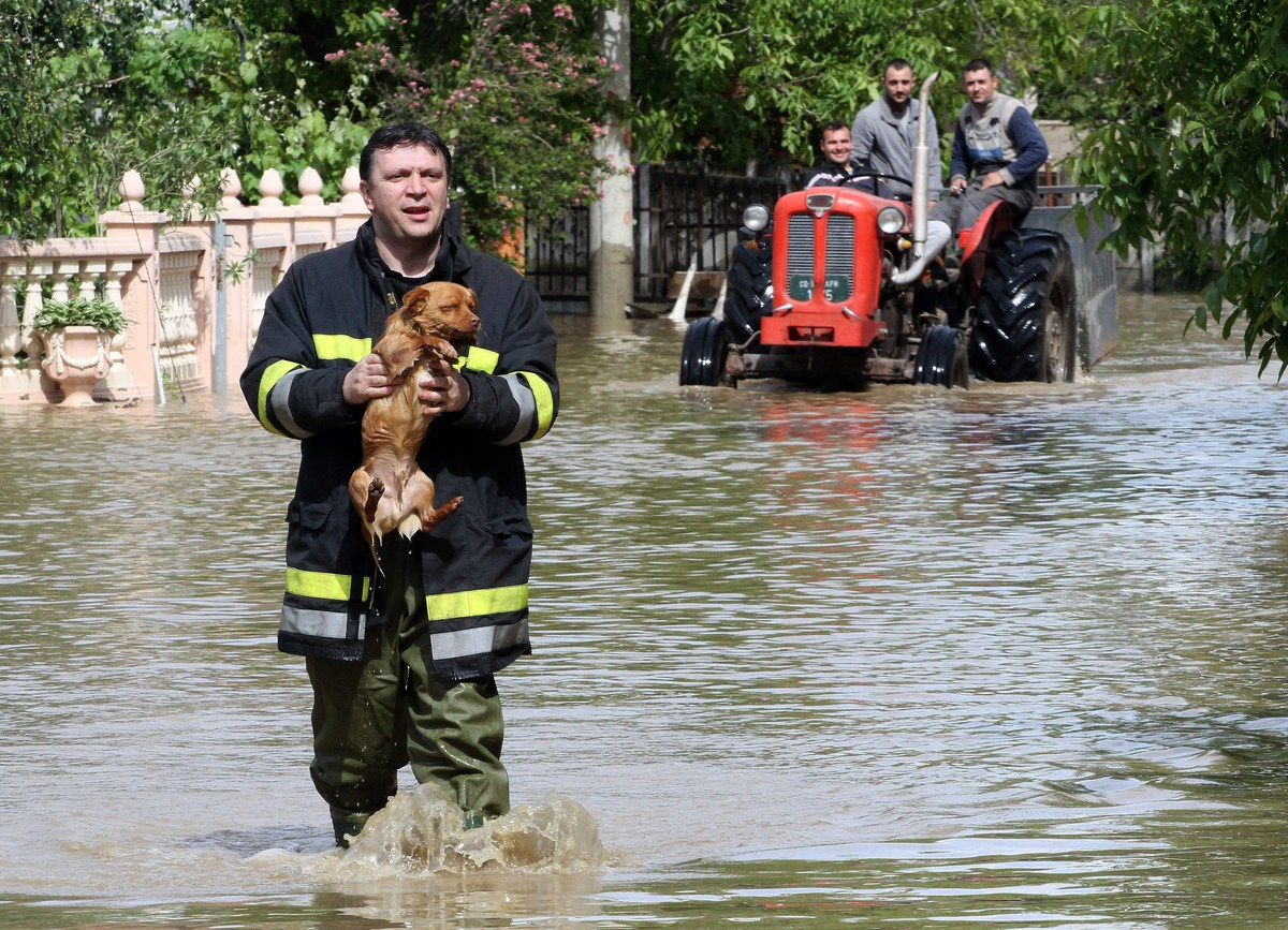 animal photos of the week rescuers save dogs from tragic