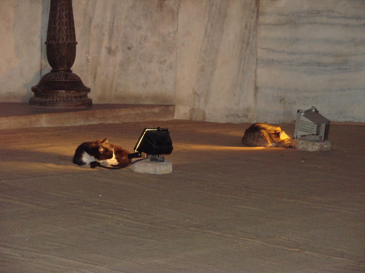 おいしそうな脚の女子校生 241脚目猫ガイジ隔離スレ [無断転載禁止]©bbspink.comYouTube動画>3本 ->画像>3359枚