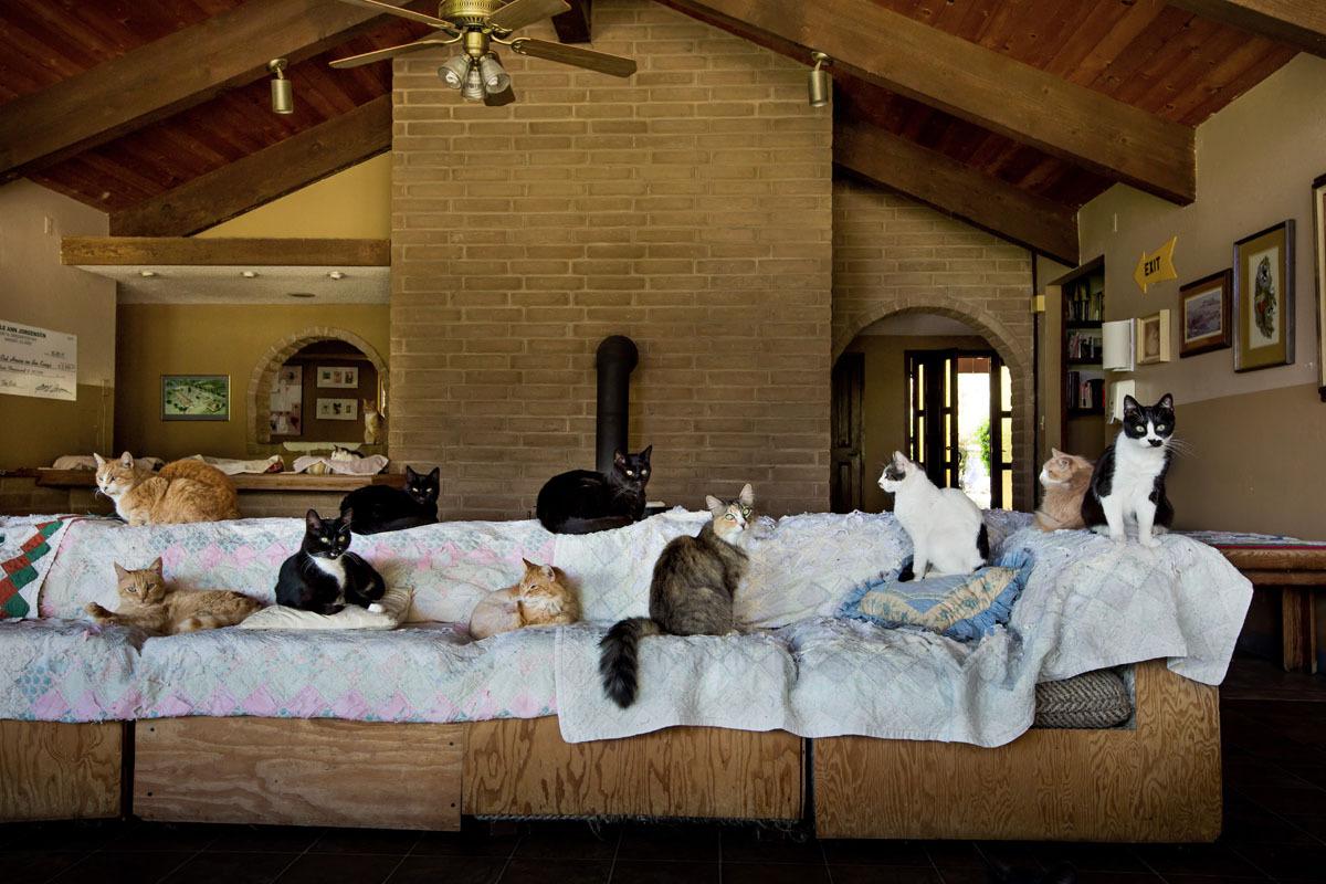 cats at sanctuary