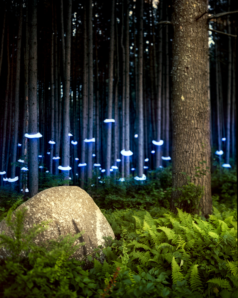 Landscape Lighting Jobs: Electric Landscapes Reveal The World's Most Pressing