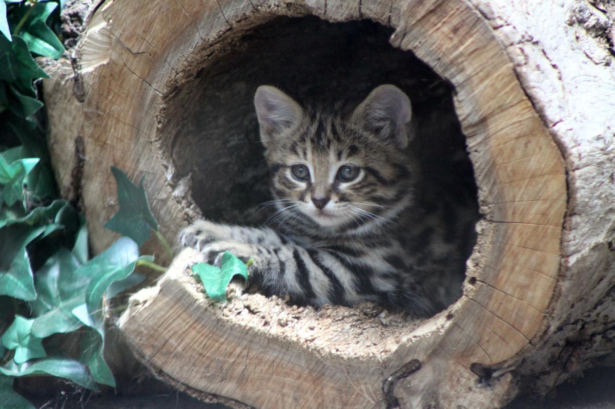marucci cat 6 bbcor