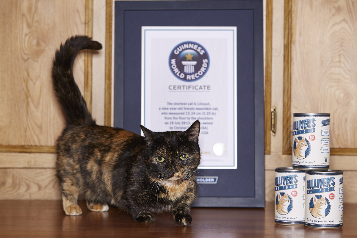 Biggest Cat In The World Guinness 2015 guinness world records' weirdest records of 2015 | huffpost