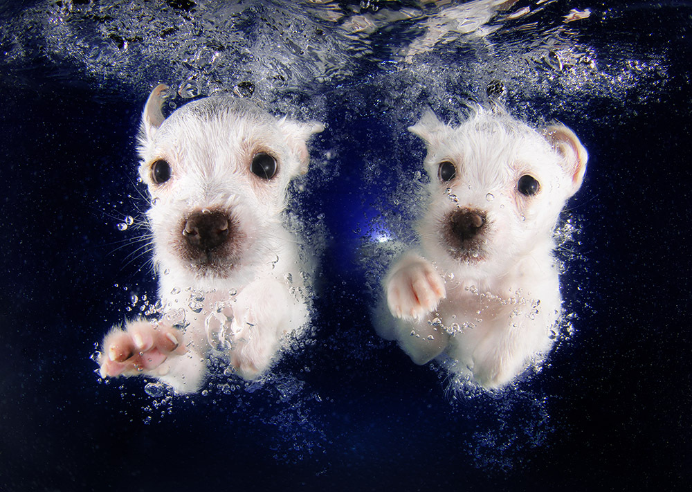 Underwater Puppies - Seth Casteel