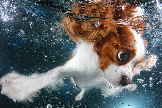 Perros bajo el agua las fotografas de animales nadando Seth