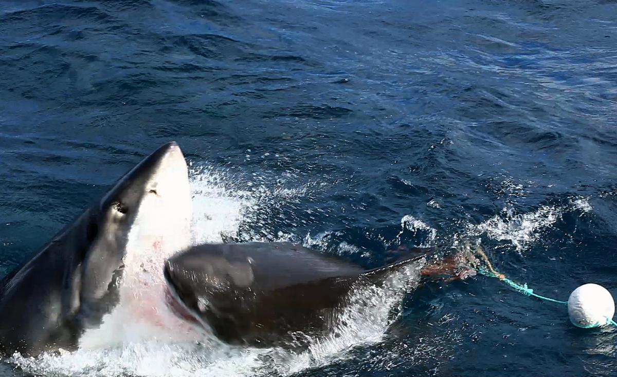 Then a Shark by Azreto on DeviantArt |Half Human Half Shark