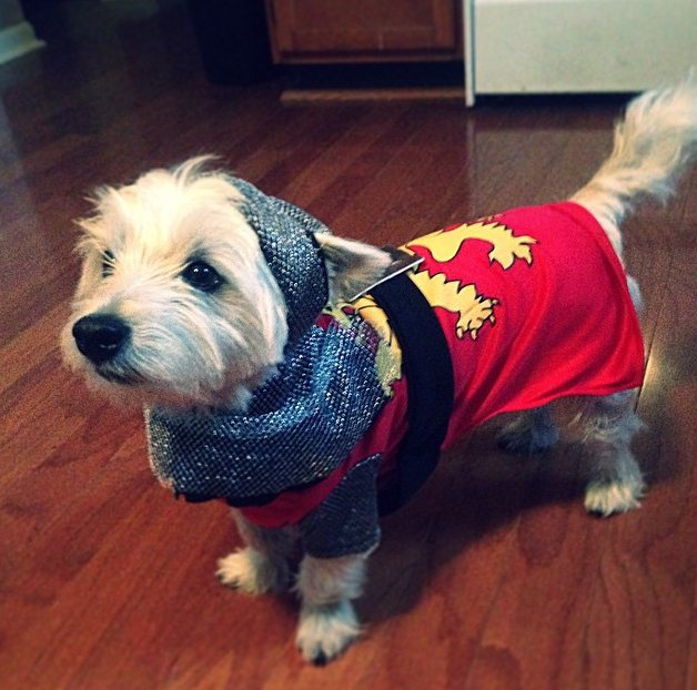 25 Pet Halloween Costumes That Are So Cute We Canu0027t Even & 25 Pet Halloween Costumes That Are So Cute We Canu0027t Even u2013 Pets On Board
