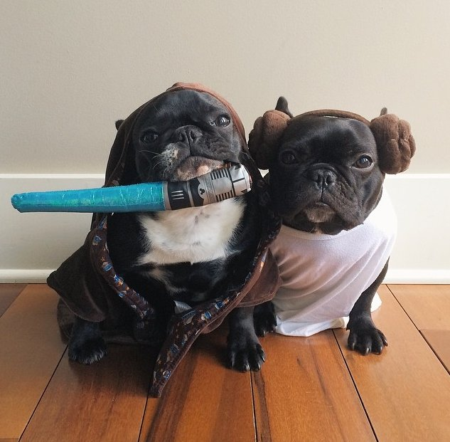 petsmart grooming coupon 10 off petsmart coupons 2015 october 2015