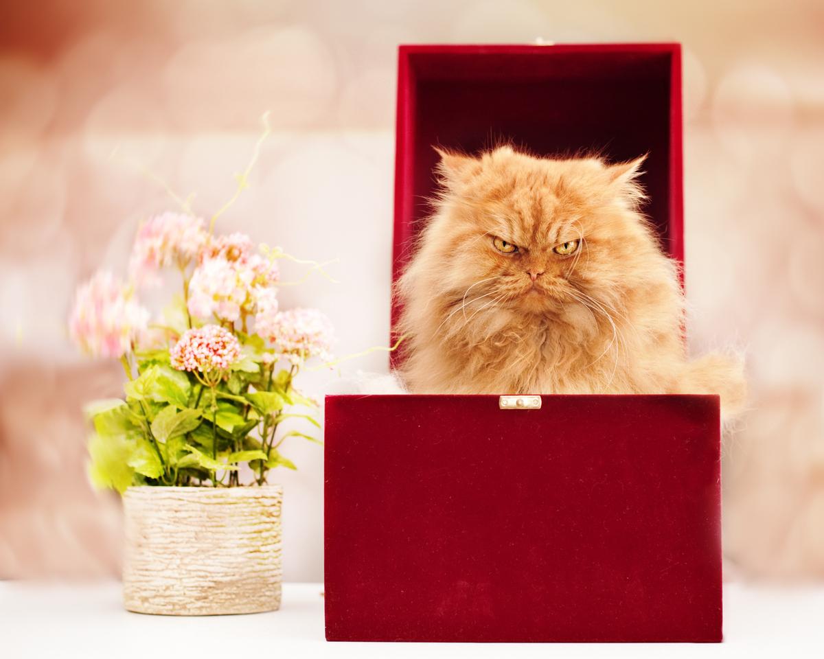 Картинки по запросу злой кот в коробке