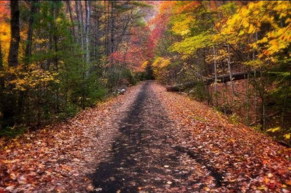 The Best Scenic Bike Rides for Fall | HuffPost