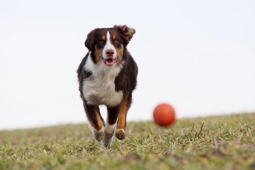 10 segreti per crescere ed educare al meglio il tuo cane foto - Educare il cane a non salire sul divano ...