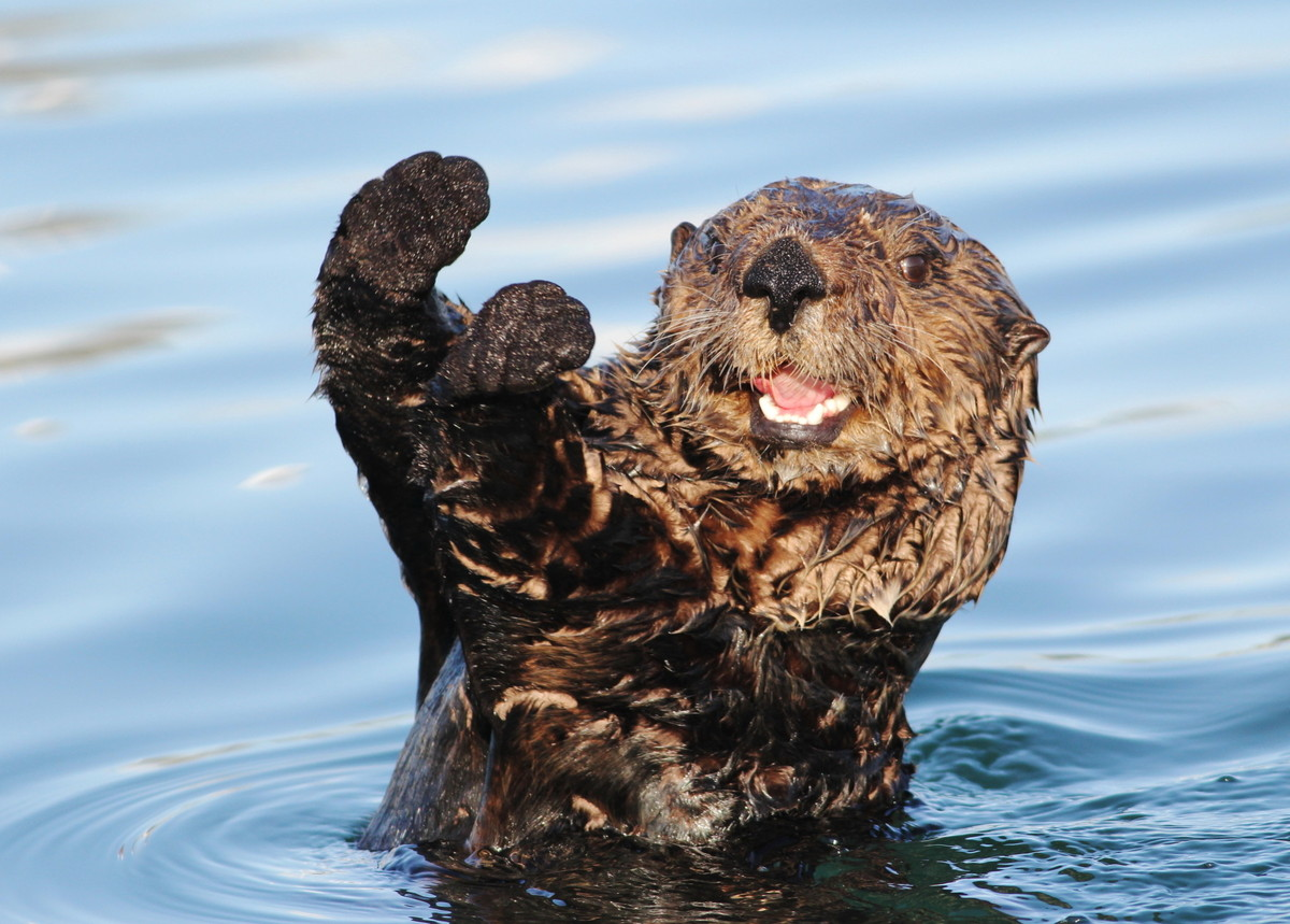Otter Habitat  Who Are Otters  trackerccifsuedu