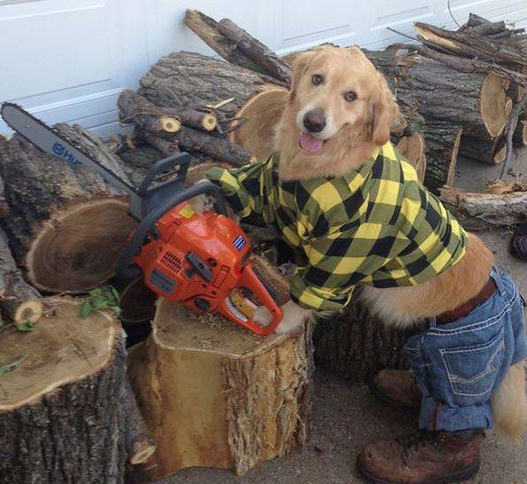 Bailey The Golden Retriever Is Our New Favourite Internet