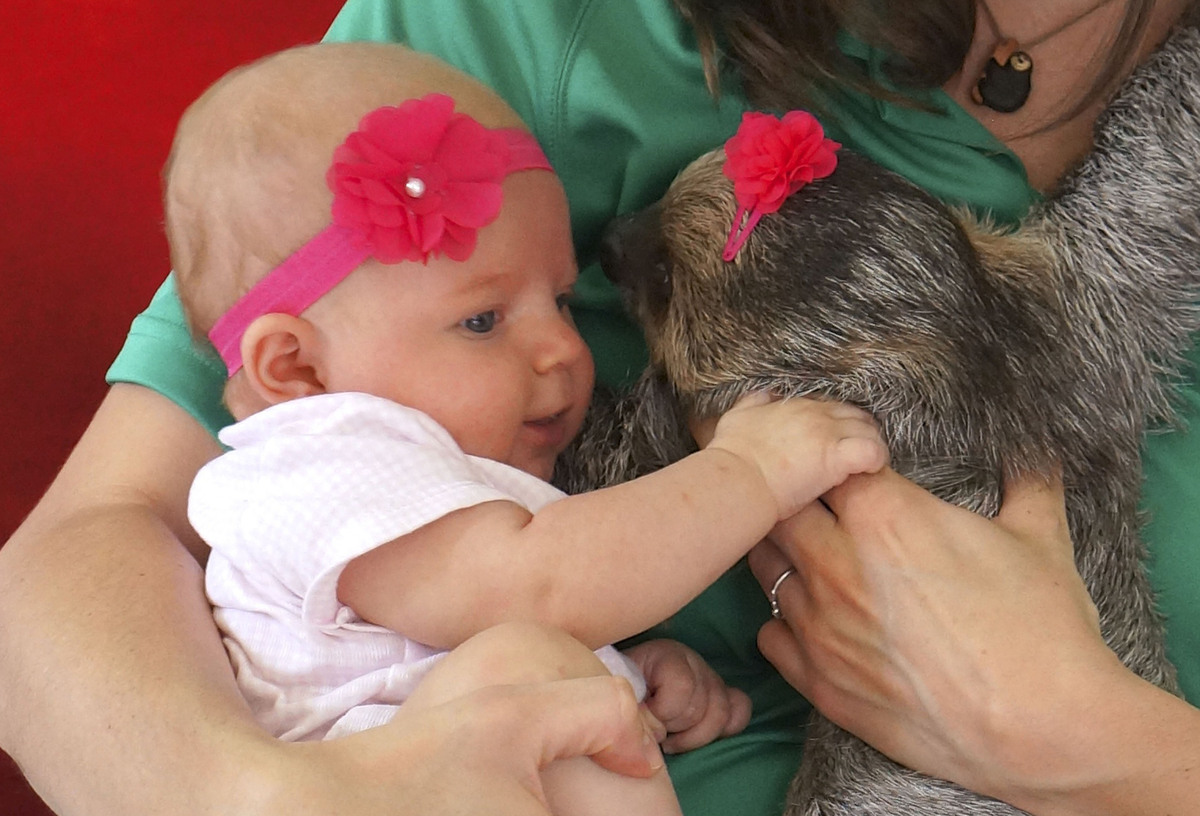 Baby And Sloths Unexpected Friendship Makes Perfectly Adorable - 5 month old baby and sloth are the most unlikely of best friends