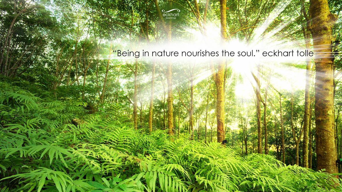 Eckhart Tolles Guide To Finding Peace Through Nature Temple