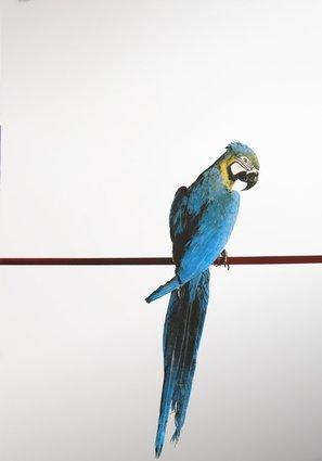 Artefiera 2015 alla kermesse dell 39 arte a bologna anche - Serigrafia su specchio ...