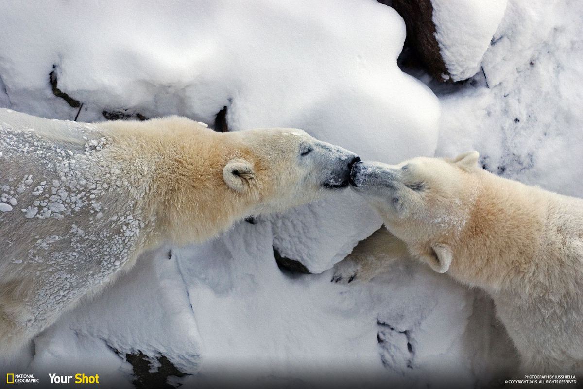 Celebrate International Polar Bear Day With These Stunning