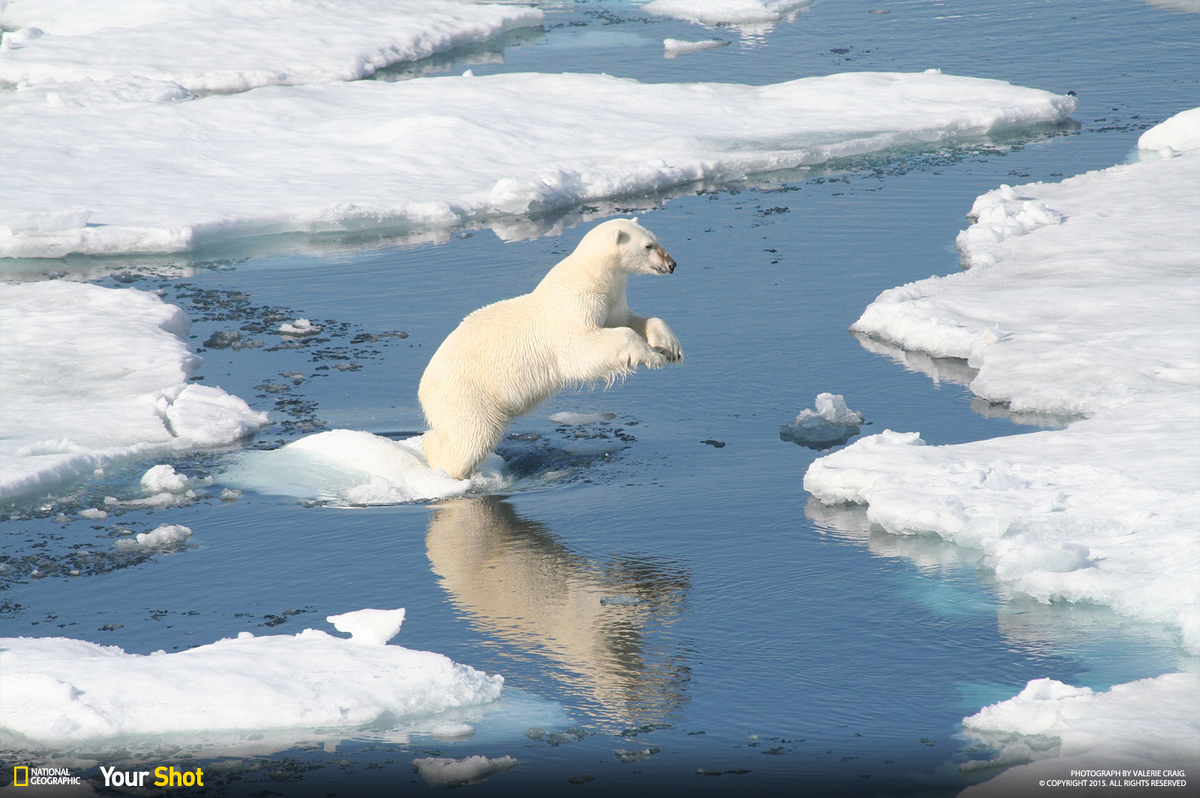 celebrate international polar bear day with these stunning
