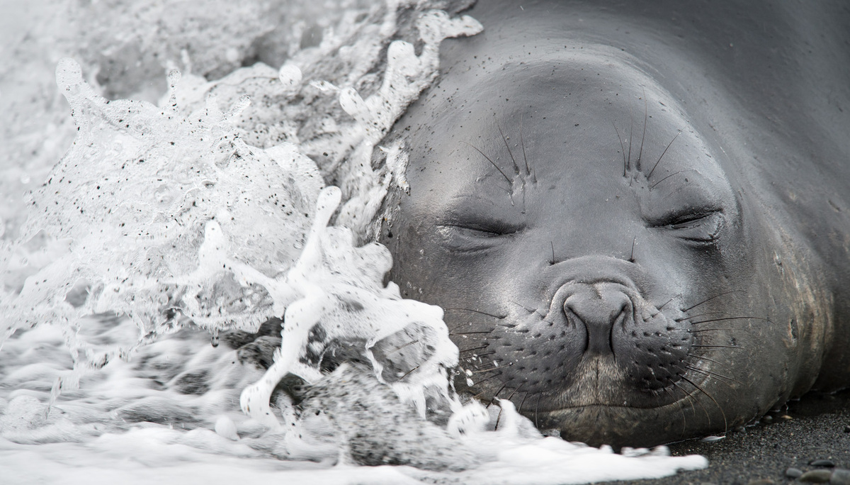 φωτογραφίες ζώα άγρια φύση