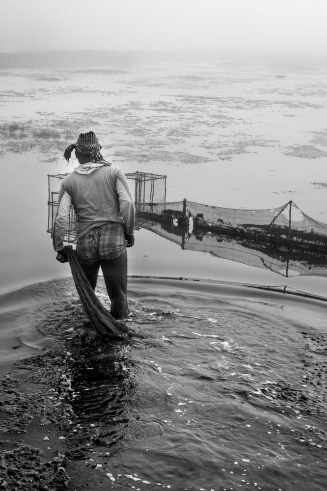 Peso di massimo di Volga da pesca russo