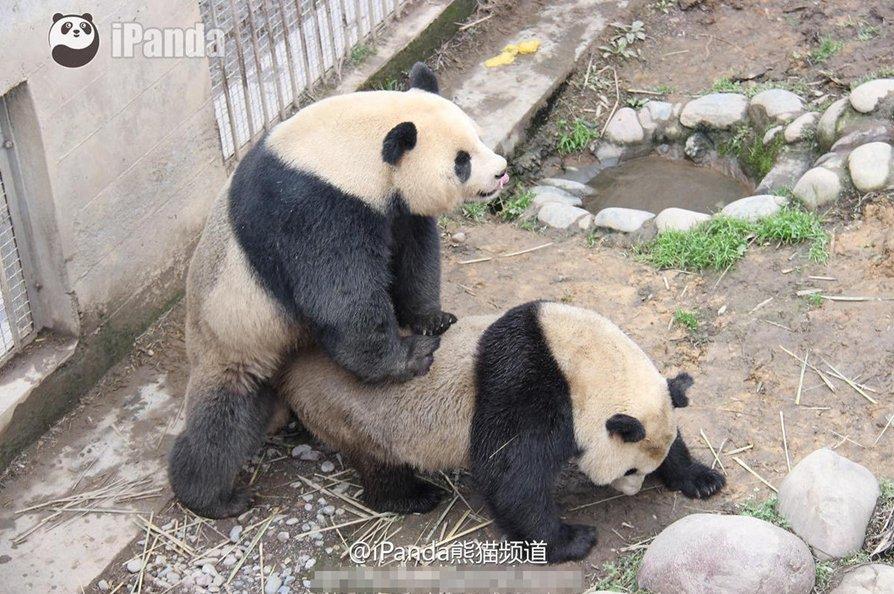 panda slideshows
