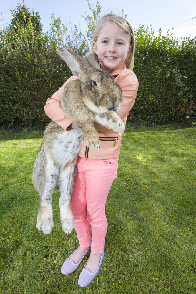 F Giant Rabbit Giant Rabbits Make Exc...