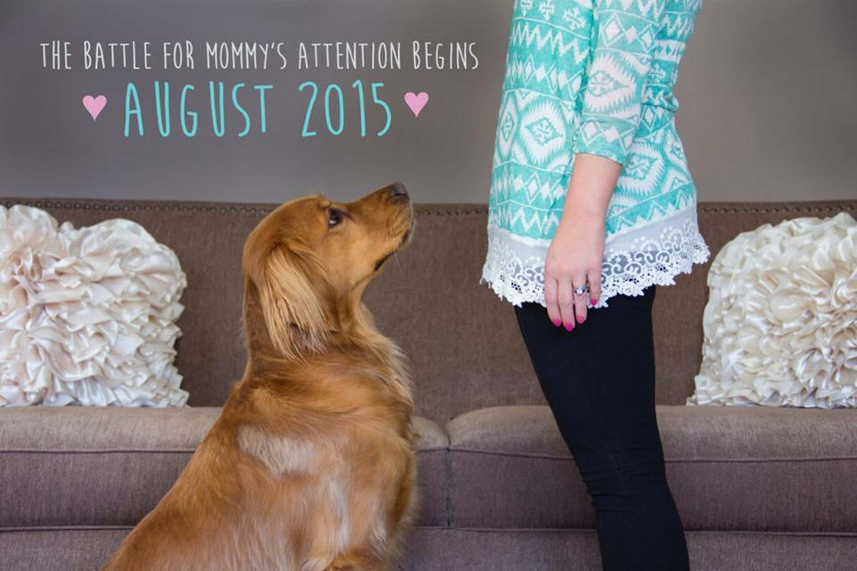 50 Adorable Dogs Who Shared Their Familys Pregnancy News In The – Announcing Baby News