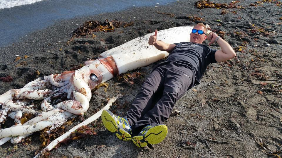 Giant Squid Washes Up On New Zealand Beach After ...
