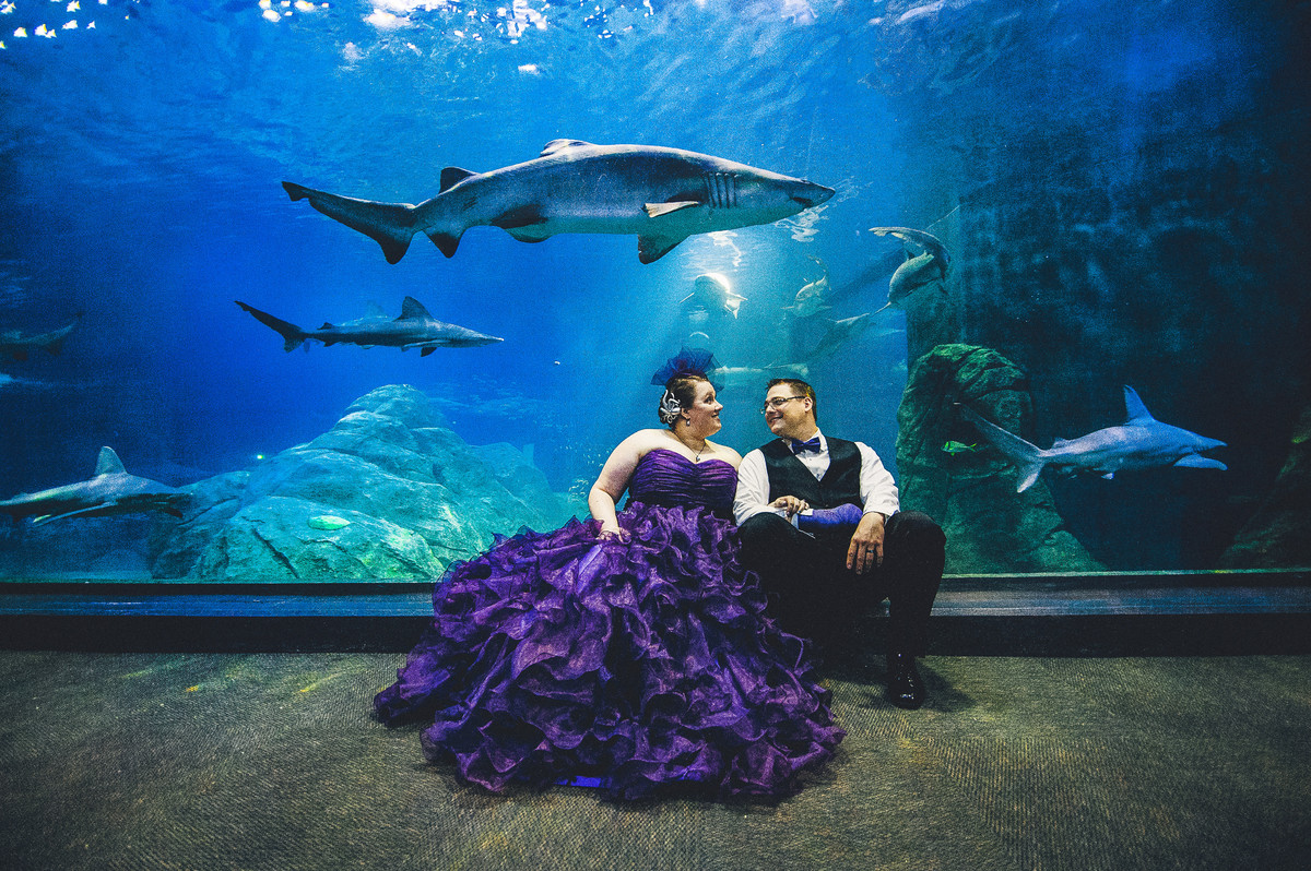 13 Unexpectedly Awesome Animal Wedding Guests Huffpost