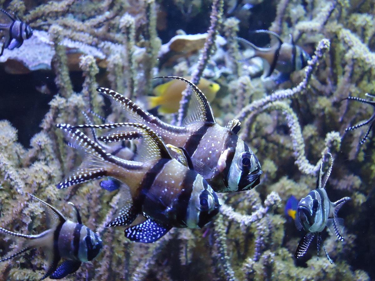 Los mejores acuarios de europa 4d info for Peces de acuario marino