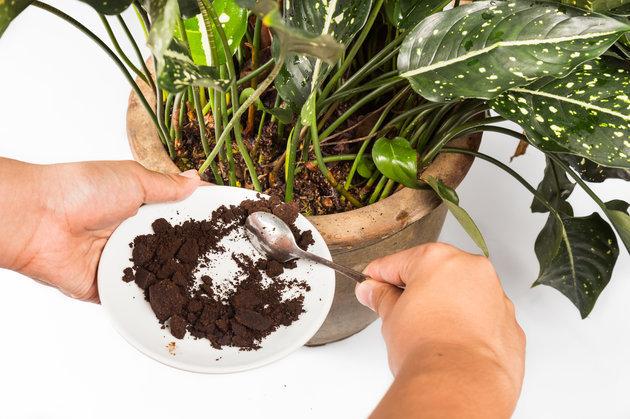 Comment utiliser le marc de caf avec ces 8 astuces - Marc de cafe fourmis ...