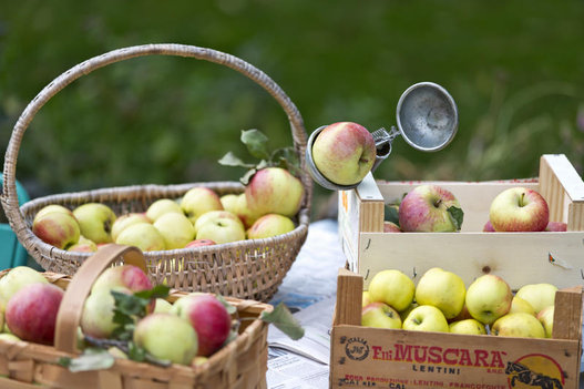 Una mela al giorno ma sai scegliere quella giusta - Immagini stampabili di mele ...