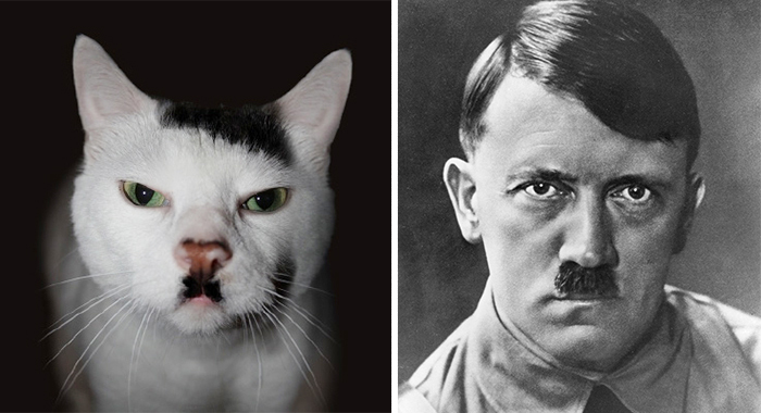 الشبه بين الممثلين والحيوانات