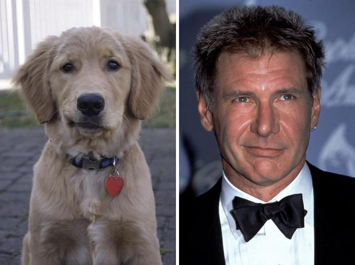 التشابه بين عالم الحيوان والممثلين