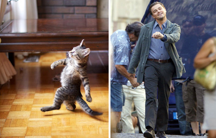 التشابه بين الحيوانات والممثلين